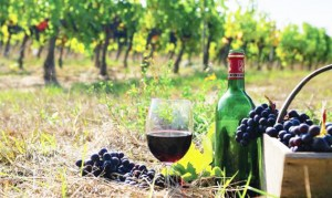 efstratios-hotel-edipsos-wine-tasting