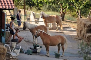 efstratios-hotel-edipsos-horse-riding-1